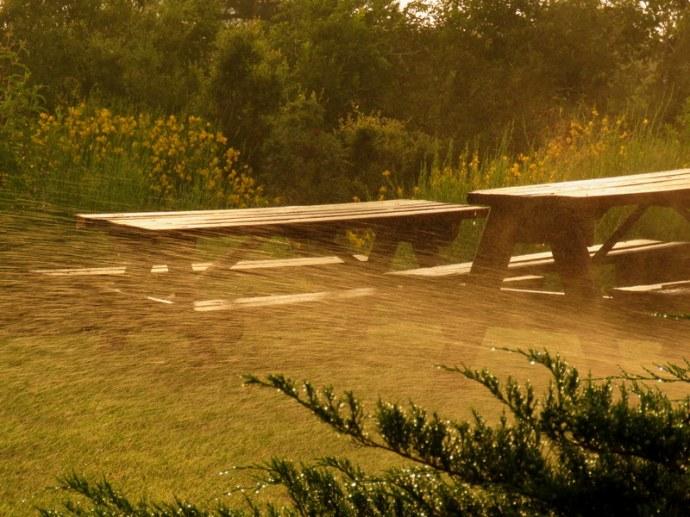 Juniperus_Mojjev_IMG_9710
