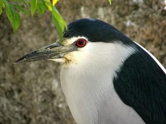 Взрослая птица