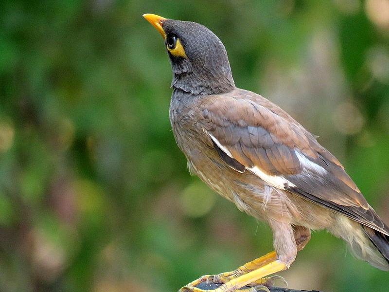 Молодая птица