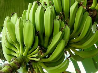 Banan_zel_P9040110_a