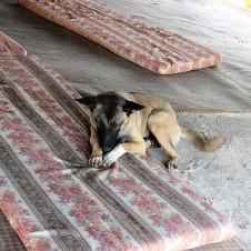 Beduiny_IMG_2154 (2)