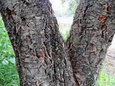 Quercussuber IMG_1884 (2)