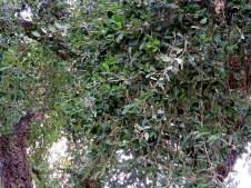 Quercussuber IMG_1893-003