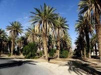 Palm_P6054748