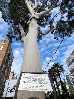 Eucalyptus Citriodora IMG_7690 (2)