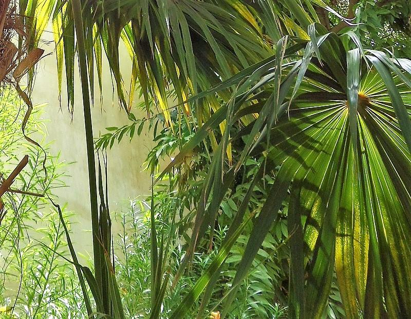 трехцветная пальмы и лианы картинки всего они наслаждаются
