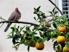 Apelsin_IMG_3170-001