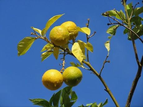 Apelsin_IMG_4591 (2)