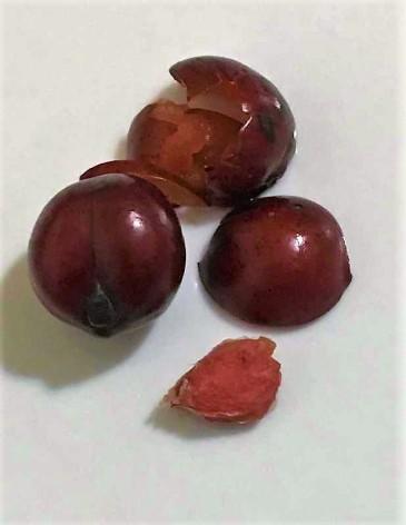 Prunus cerasifera IMG_3239 (2)
