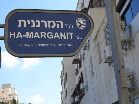 Anagallis_Marganit_DSCN1649-001