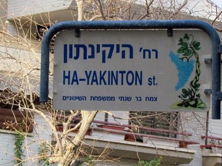Giazint_Hyacinthus_Yakinton_IMG_8469-001