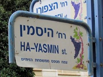 Jasminum_yasmin_IMG_1675-001