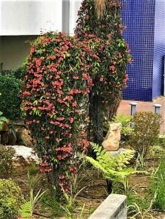 Bignonia capreolata IMG_4859 (2)-001