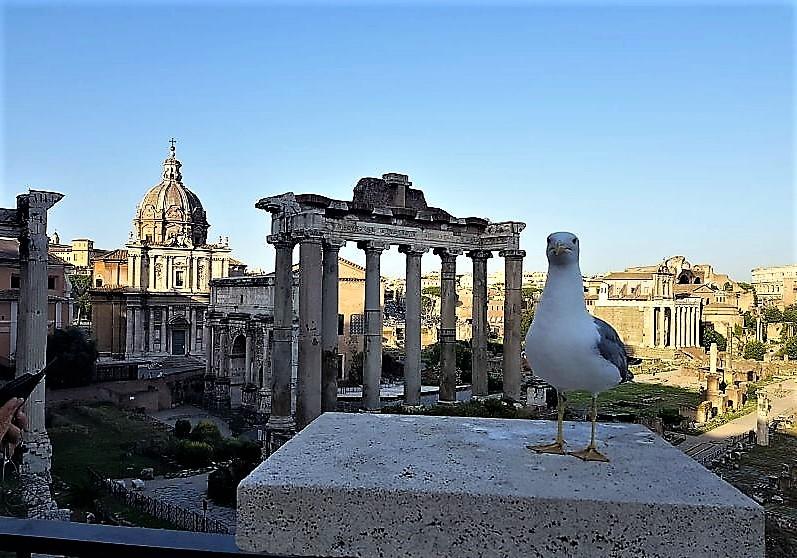 Rome. Город на семи холмах