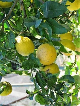 Limon_IMG_7238-001 (2)
