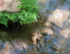 Vodopad_Hermon_Pyby_IMG_1675-001 (2)